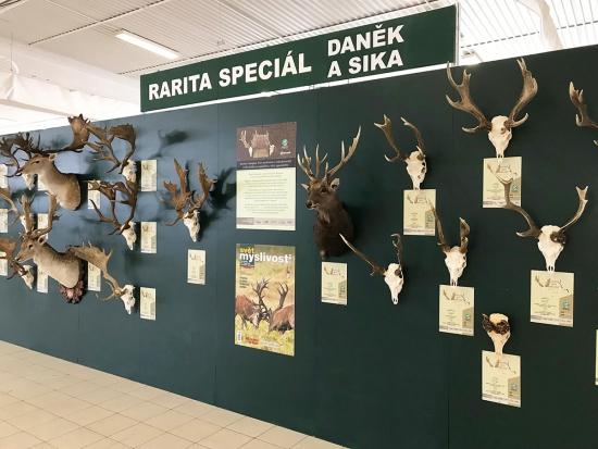 Začíná Natura viva 2019