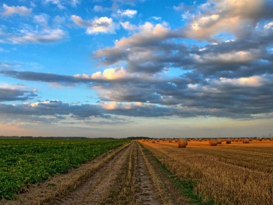 MZe podporuje zlepšení zemědělského hospodaření: plocha jedné plodiny bude maximálně 30 hektarů