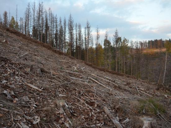Sněmovna schválila novelu lesního zákona; stát bude regulovat stavy spárkaté zvěře