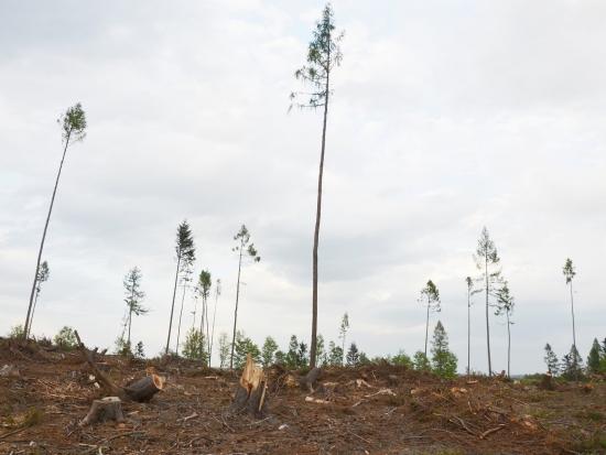 Zeman podepsal novelu lesního zákona, hospodaření se zvěří bude plánovat stát