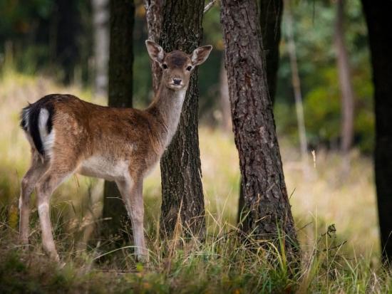 Sdružení lesníků vyzvalo ke změně lovu zvěře