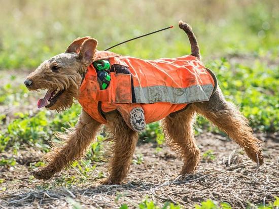 Kalifornie: Aktivisté za práva zvířat si stěžují na používání obojků s GPS při lovu