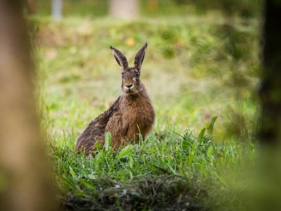 U zajíce uhynulého v Litvínově byla potvrzena tularémie