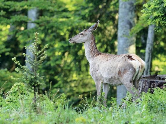 Novela vyhlášky o způsobu výpočtu výše újmy nebo škody způsobené na lesích