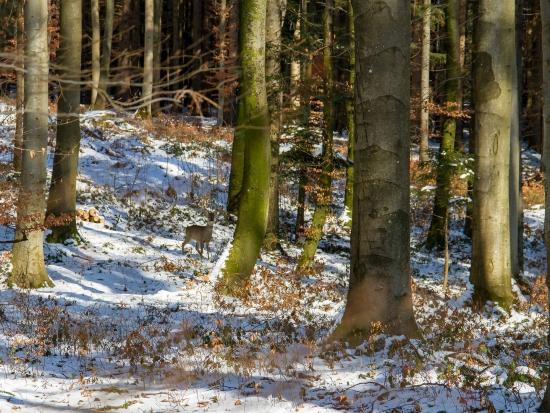 Braniborské ministerstvo povoluje lov veškeré spárkaté zvěře na naháňkách