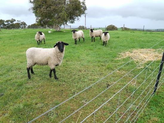 Stát bude hradit veškeré náklady na zabezpečení chovů proti dravcům a šelmám
