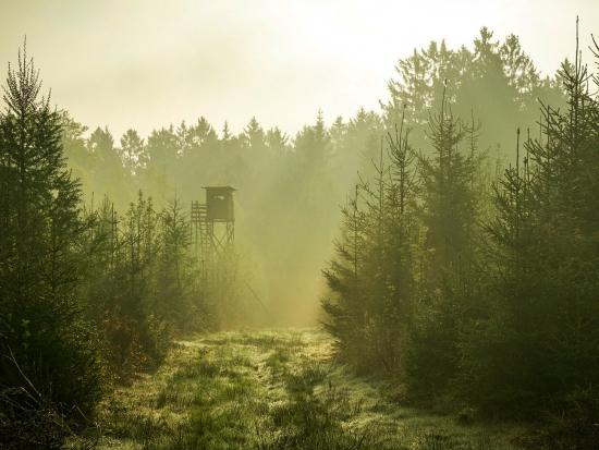 Lesy ČR nabízejí k pronájmu 19 volných honiteb a oboru