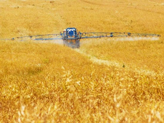 Zákaz používání glyfosátu na sušení obilovin a řepky