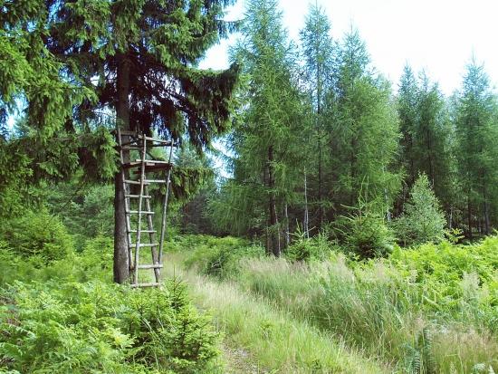 """Projednávání novely zákona o lesích s """"mysliveckým přílepkem"""" odloženo na pátek"""