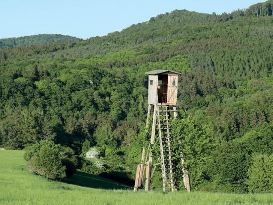 Lesy ČR opět spustí pronájmy honiteb