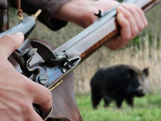 Lov s předovkami povolen v Maďarsku