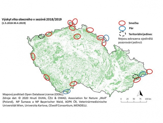 Do Česka zasahuje osmnáct vlčích teritorií, počet smeček se za rok zvýšil