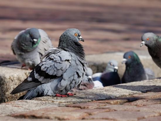 Český Brod: Proti střílení holubů ve městě protestovali obyvatelé i ochránci zvířat